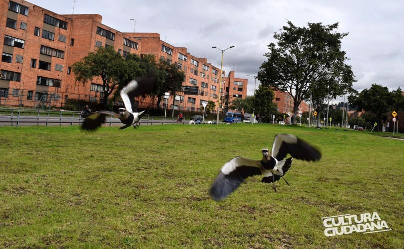 Nombre de la propuesta: A LO NATURAL Código: 908-3-770 Seudónimo: Rascael Nombre original de la foto: Bienvenido. Descripción: Barrio San Nicolás. 5 de mayo de 2018. De la región del Meta vino y en Bogotá encontró el paraíso.