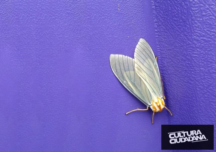 Nombre de la propuesta: A LO NATURAL Código: 908-3-770 Seudónimo: Rascael Nombre original de la foto: Demorado. Descripción: Parque Cayetano Cañizares. 15 de mayo de 2018. Tan perfecta y bella es la naturaleza que hasta en sus diversos tonos combinan.