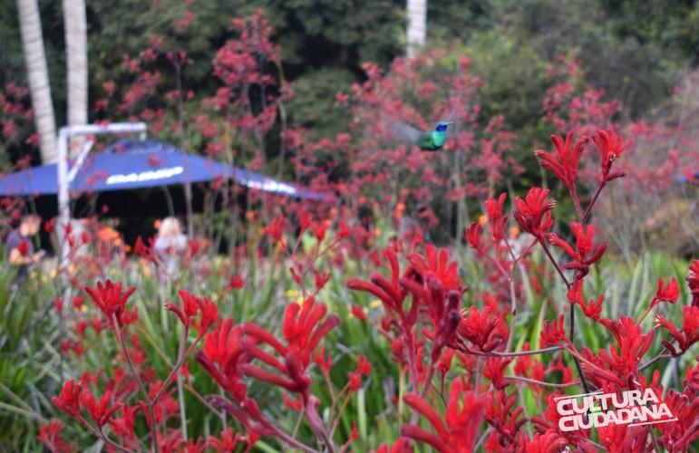 Nombre de la propuesta: A LO NATURAL Código: 908-3-770 Seudónimo: Rascael Nombre original de la foto: Intenso Red Descripción: Jardín Botánico de Bogotá. 12 de mayo de 2018. Caminan, vuelan y poseen colores vivos, que más se le pide a la vida, la naturaleza es perfecta.